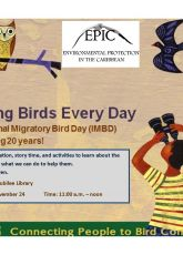 Learn about birds for children